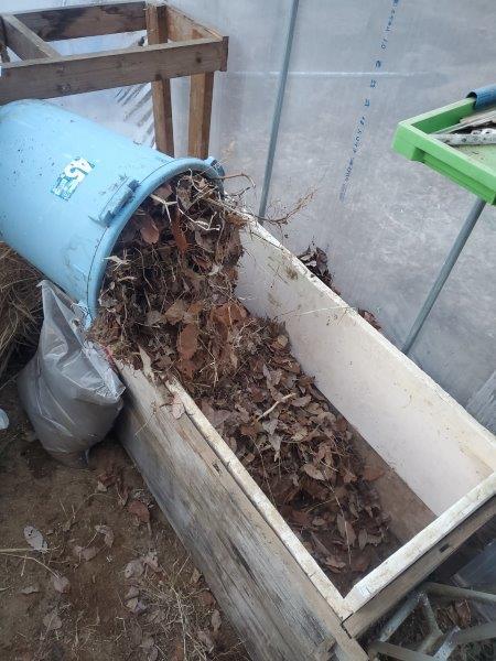 温床作り枯葉投入